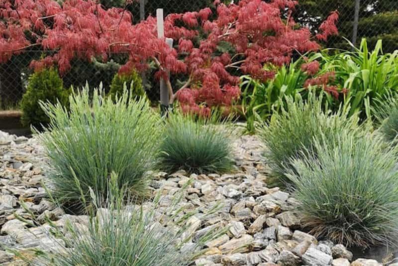 Kora kamienna gnejs - Sposób na piękne rabaty ogrodowe
