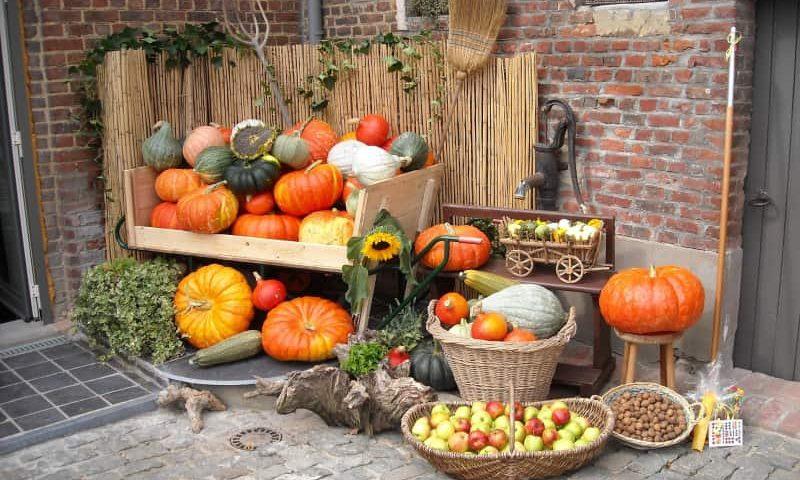 Wrzesień w warzywniku